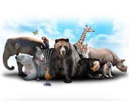 dieren_254x200.jpg